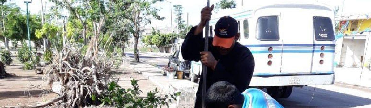 """Ecología reforesta instalaciones de Capilla del Gallo y parque de """"Los Maestros""""."""
