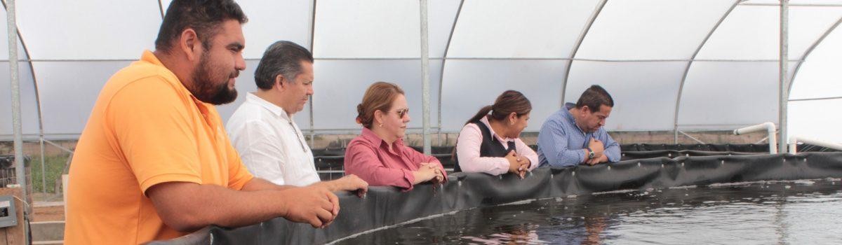 10 toneladas de tilapia, primera producción en granja de Colonia Morelos