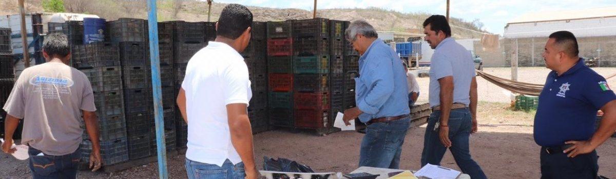 Inicia gobierno municipal con operativo de seguridad contra robo hormiga de mango.