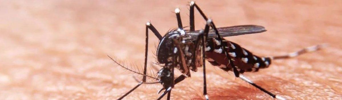 Presidente municipal de Escuinapa llama a la ciudadanía a combatir el mosco transmisor de dengue, zika y chinkungunya.
