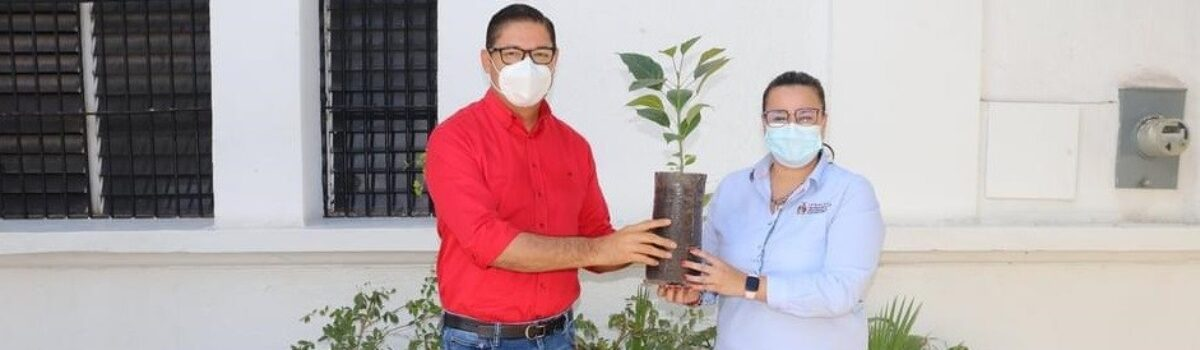 Recibe Soto Grave 3 mil árboles de la Secretaría de Desarrollo Sustentable: se entregan bolsas de tela en el mercado municipal y distintivos de libres de plástico.
